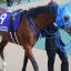 【阪神大賞典 2018】映像予想|馬を見よ。~映像解析から見抜く阪神大賞典~