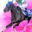 【宝塚記念2018】5年連続、牝馬が馬券入り!今年の筆頭はヴィブロスか!?